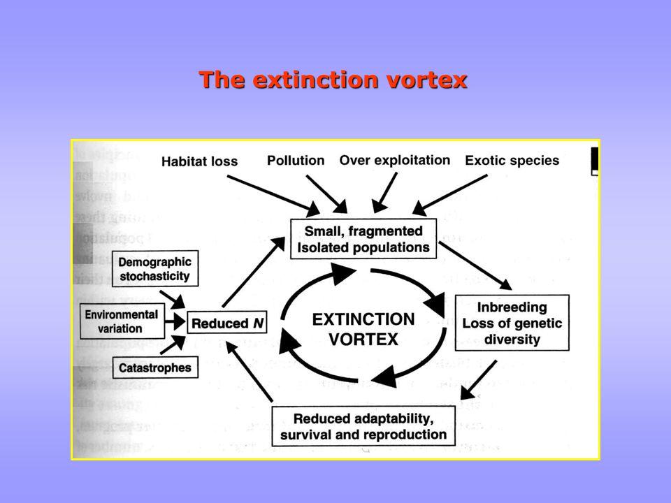 The extinction vortex