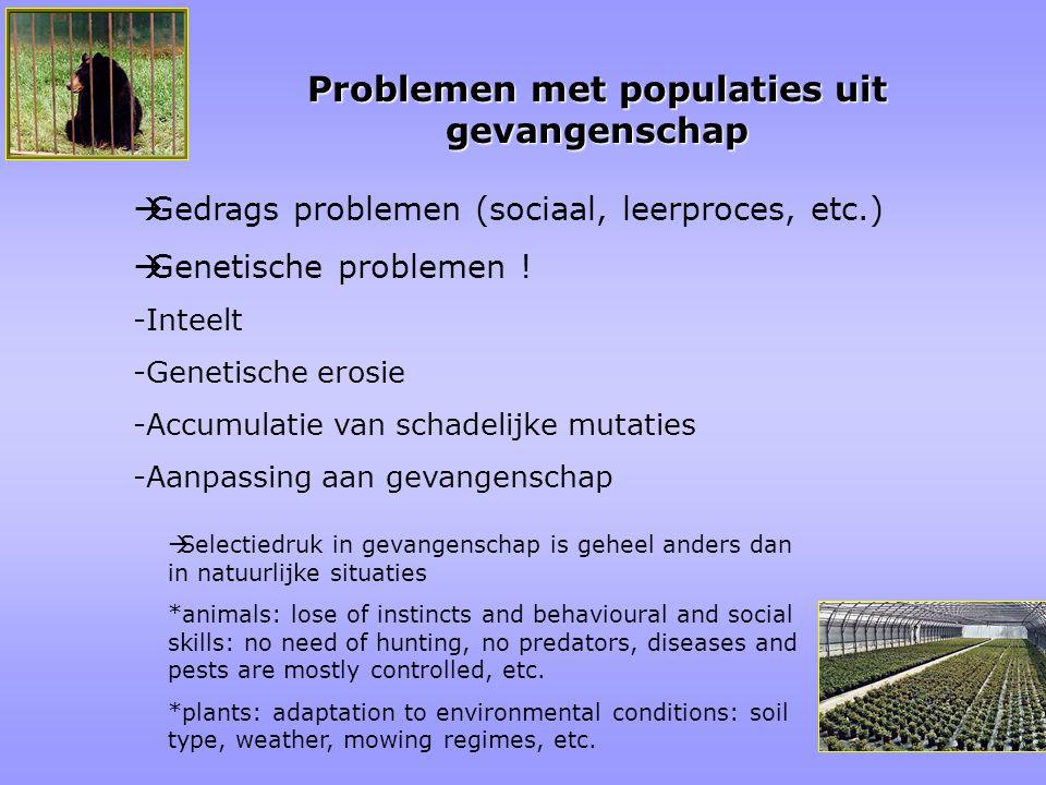 Problemen met populaties uit gevangenschap  Gedrags problemen (sociaal, leerproces, etc.)  Genetische problemen ! -Inteelt -Genetische erosie -Accum