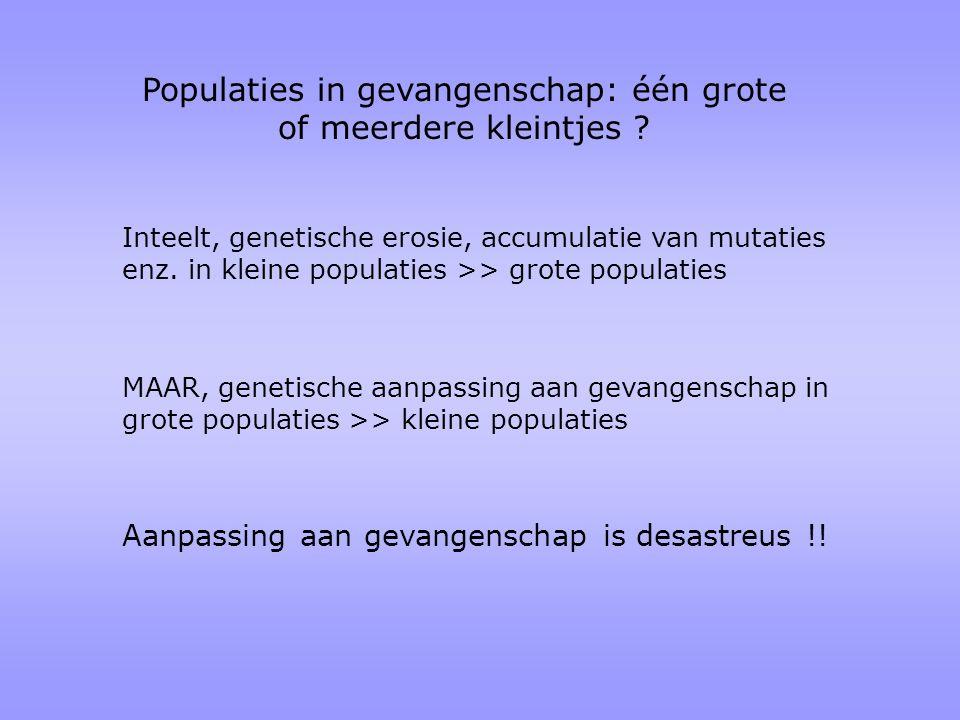 Populaties in gevangenschap: één grote of meerdere kleintjes ? Inteelt, genetische erosie, accumulatie van mutaties enz. in kleine populaties >> grote