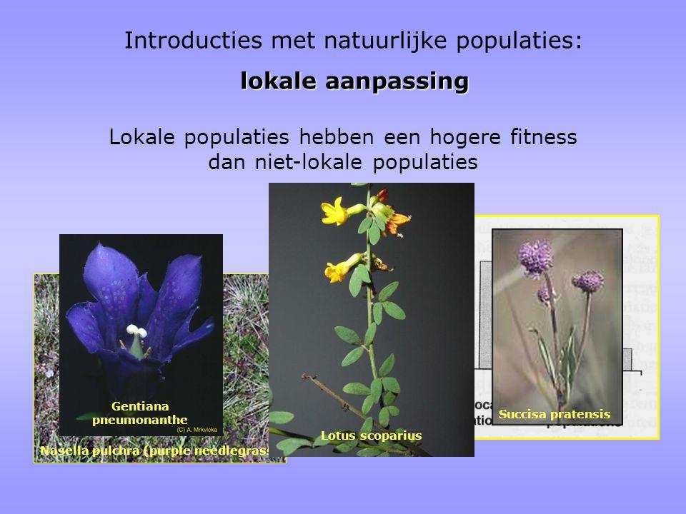 Lokale populaties hebben een hogere fitness dan niet-lokale populaties Nasella pulchra (purple needlegrass) Gentiana pneumonanthe Lotus scoparius Succisa pratensis Introducties met natuurlijke populaties: lokale aanpassing