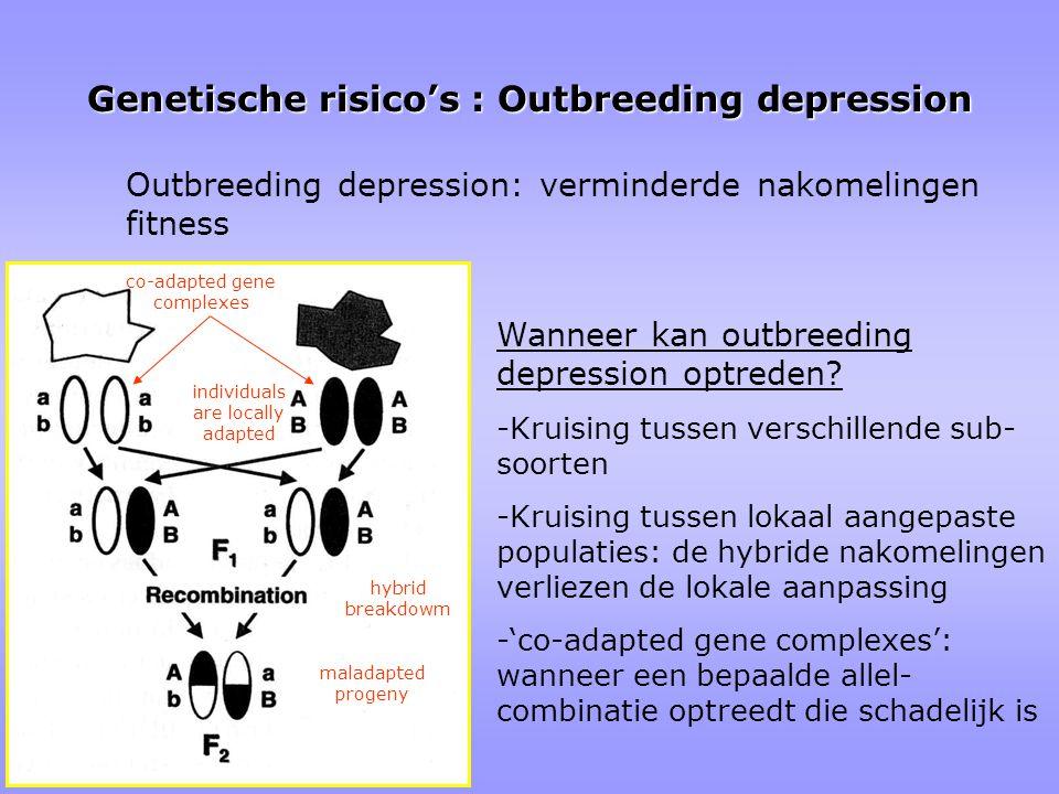 Genetische risico's : Outbreeding depression Outbreeding depression: verminderde nakomelingen fitness Wanneer kan outbreeding depression optreden.