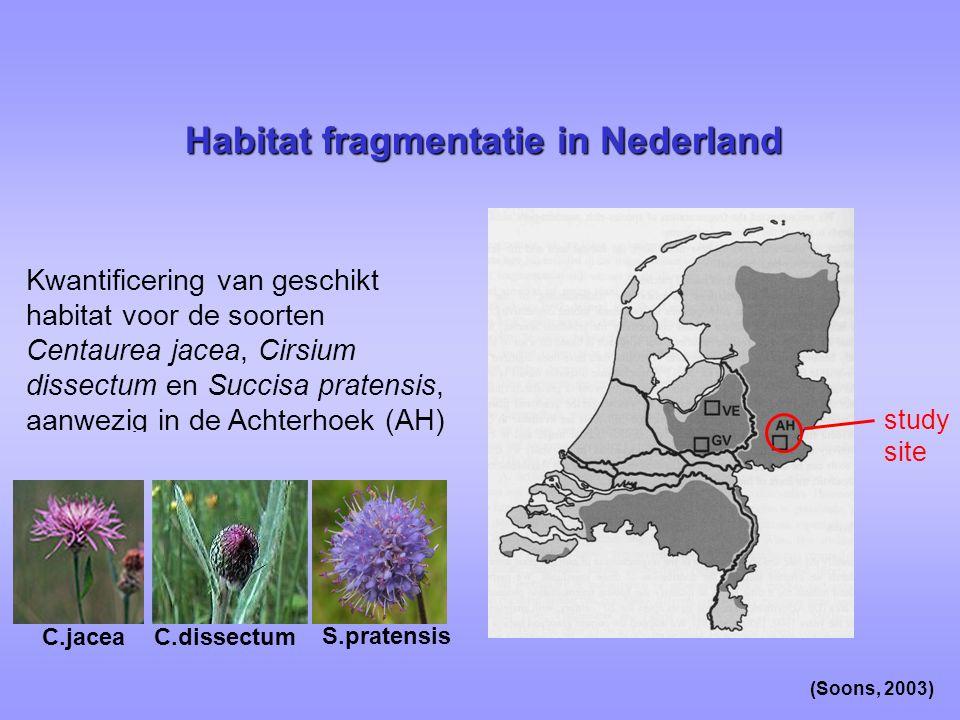 Habitat fragmentatie in Nederland study site Kwantificering van geschikt habitat voor de soorten Centaurea jacea, Cirsium dissectum en Succisa pratensis, aanwezig in de Achterhoek (AH) C.jaceaC.dissectum S.pratensis (Soons, 2003)