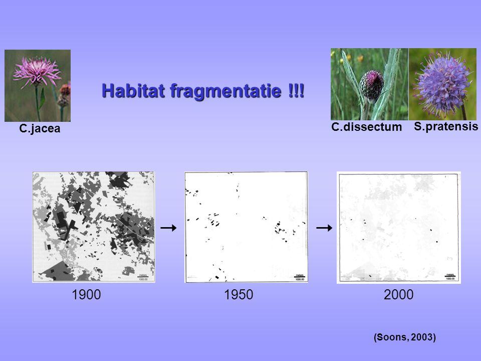 C.dissectum C.jacea Habitat fragmentatie !!! 190019502000 S.pratensis (Soons, 2003)