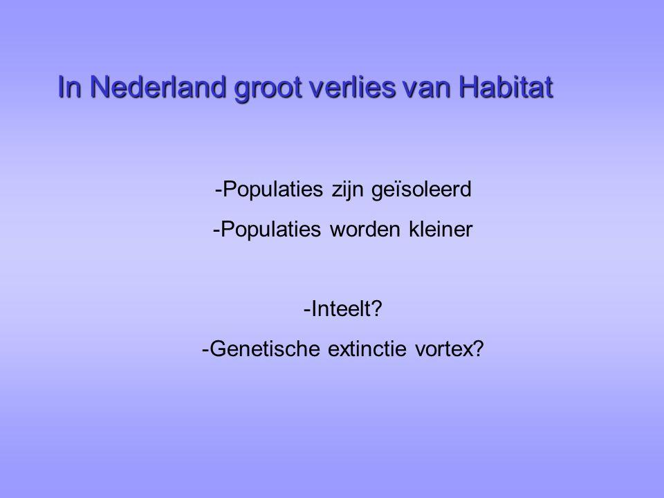In Nederland groot verlies van Habitat -Populaties zijn geïsoleerd -Populaties worden kleiner -Inteelt? -Genetische extinctie vortex?