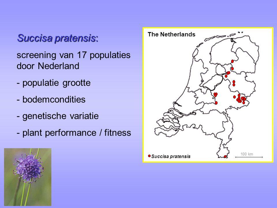 Succisa pratensis The Netherlands 100 km Succisa pratensis: screening van 17 populaties door Nederland - populatie grootte - bodemcondities - genetische variatie - plant performance / fitness
