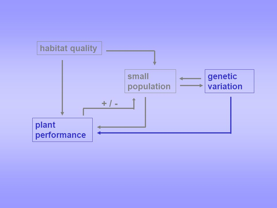 small population habitat quality genetic variation plant performance + / -