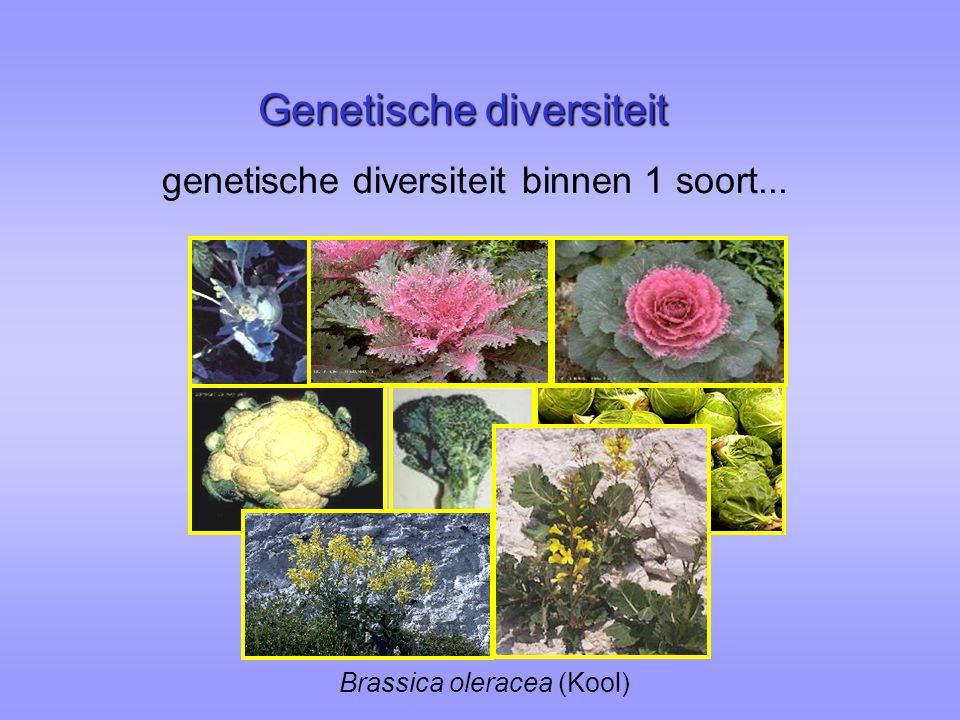 small population habitat quality genetic variation plant performance + / -