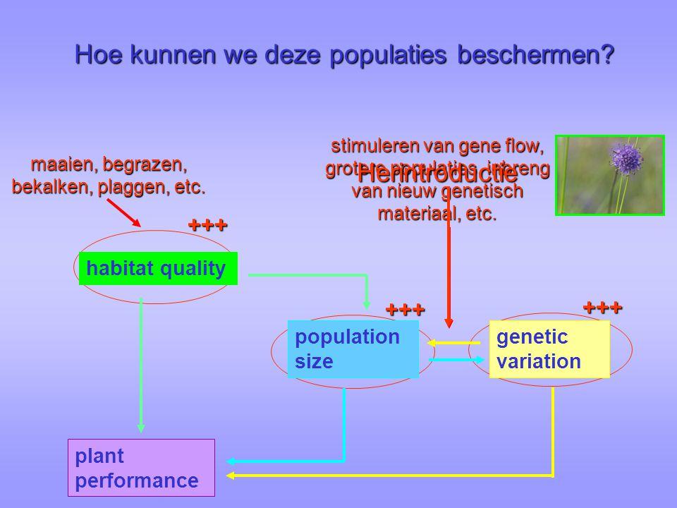 +++ maaien, begrazen, bekalken, plaggen, etc. +++ +++ stimuleren van gene flow, grotere populaties, inbreng van nieuw genetisch materiaal, etc. popula