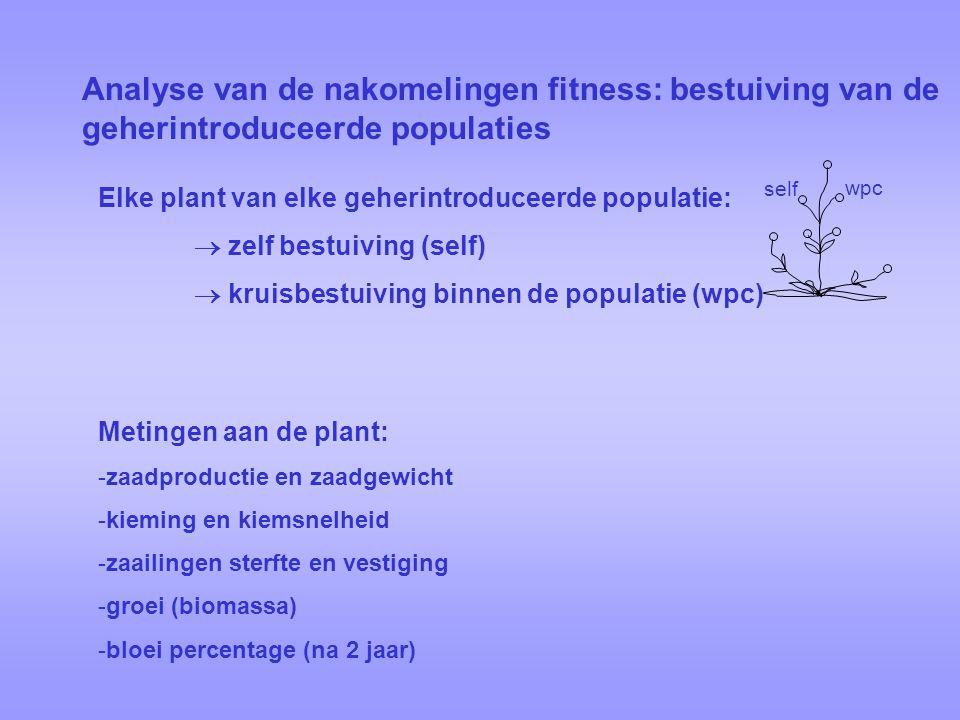 Analyse van de nakomelingen fitness: bestuiving van de geherintroduceerde populaties Elke plant van elke geherintroduceerde populatie:  zelf bestuiving (self)  kruisbestuiving binnen de populatie (wpc) self wpc Metingen aan de plant: -zaadproductie en zaadgewicht -kieming en kiemsnelheid -zaailingen sterfte en vestiging -groei (biomassa) -bloei percentage (na 2 jaar)
