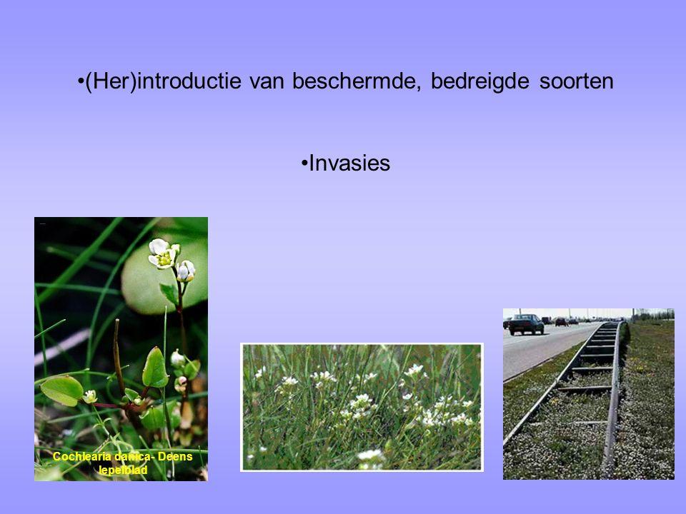(Her)introductie van beschermde, bedreigde soorten Invasies  Wat is het verschil?  Wat maakt de invasie-soorten zo anders dat zij zich wel gemakkeli