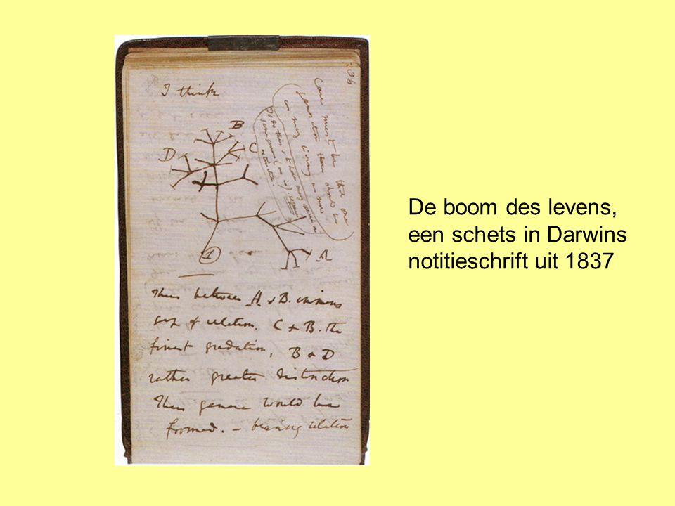 De boom des levens, een schets in Darwins notitieschrift uit 1837
