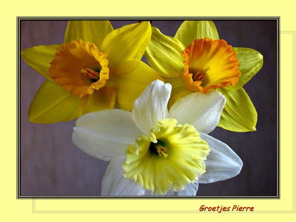 En nu nog mijn lentegroetjes er boven op, zo nu zijn mijn lentewensen op