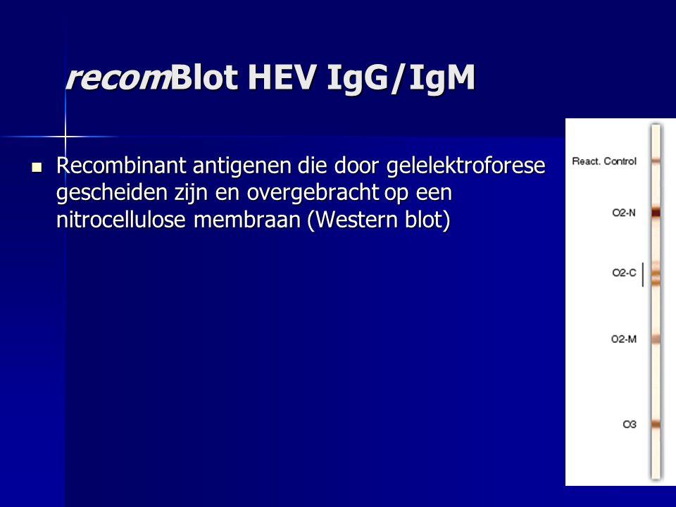 recomBlot HEV IgG/IgM Recombinant antigenen die door gelelektroforese gescheiden zijn en overgebracht op een nitrocellulose membraan (Western blot) Recombinant antigenen die door gelelektroforese gescheiden zijn en overgebracht op een nitrocellulose membraan (Western blot)