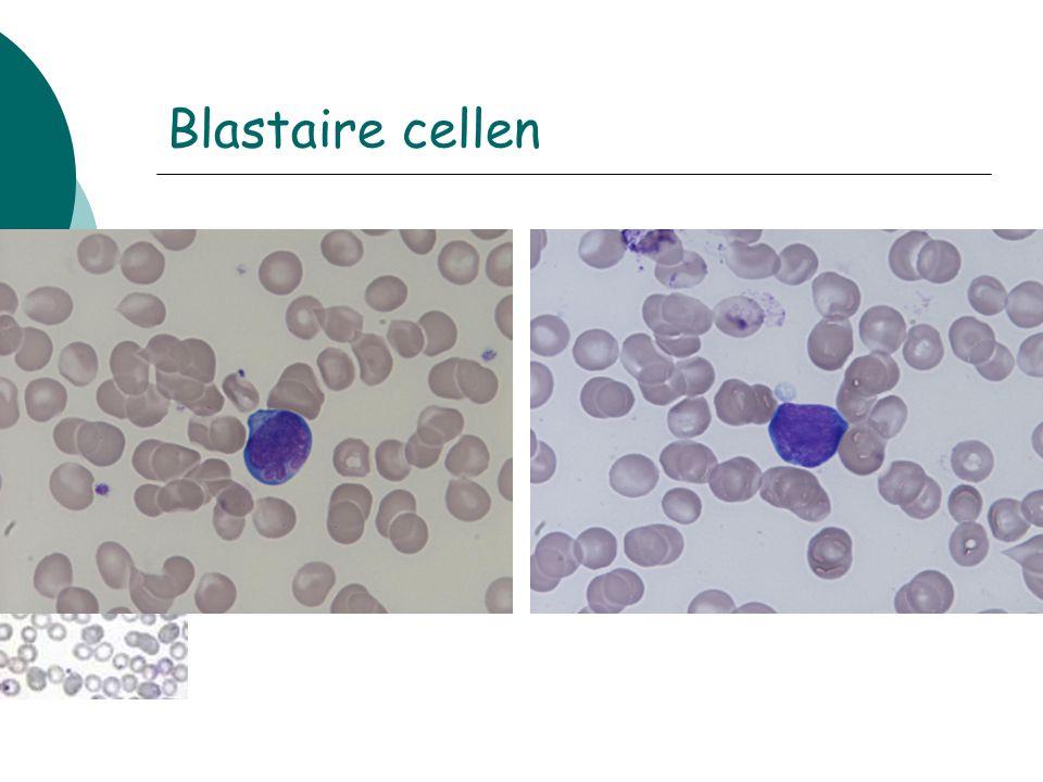 Blastaire cellen