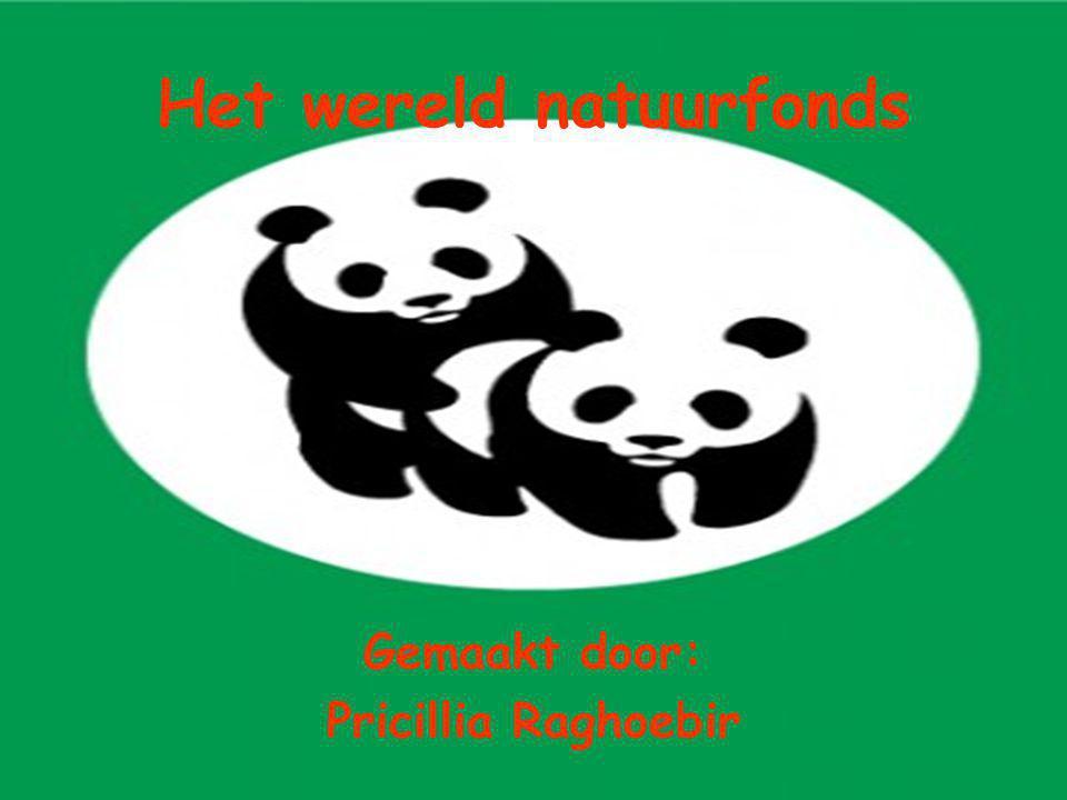 Het wereld natuurfonds Gemaakt door: Pricillia Raghoebir