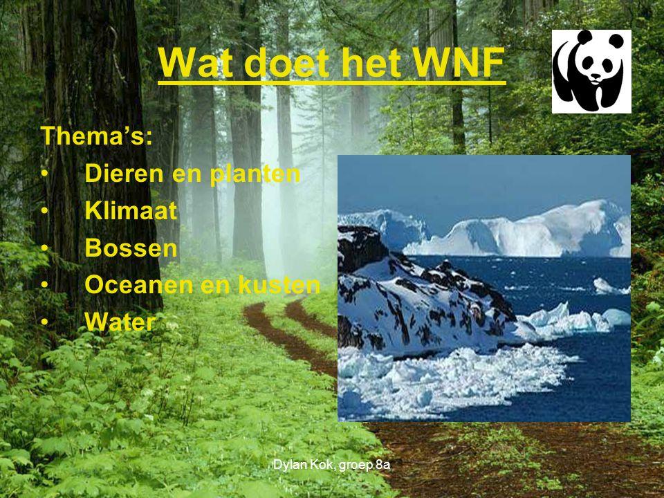 Dylan Kok, groep 8a Wat doet het WNF Thema's: Dieren en planten Klimaat Bossen Oceanen en kusten Water