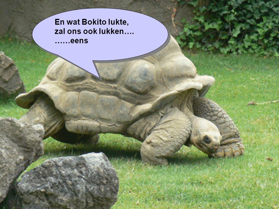En wat Bokito lukte, zal ons ook lukken…. ……eens En wat Bokito lukte, zal ons ook lukken…. ……eens
