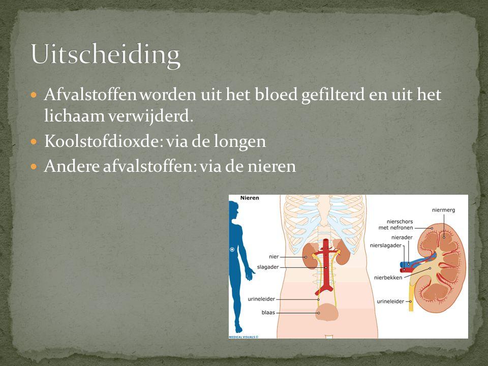 Afvalstoffen worden uit het bloed gefilterd en uit het lichaam verwijderd. Koolstofdioxde: via de longen Andere afvalstoffen: via de nieren