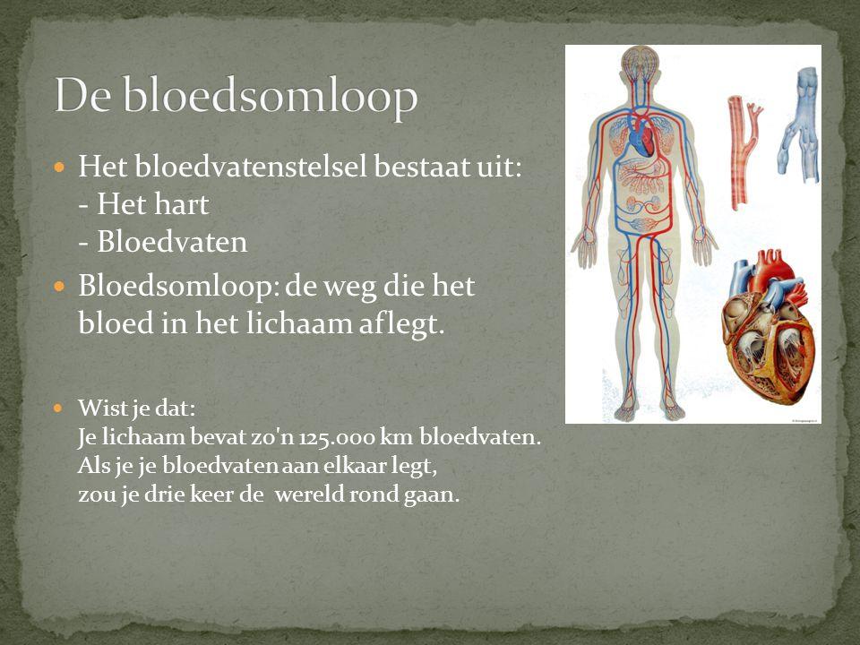 Het bloedvatenstelsel bestaat uit: - Het hart - Bloedvaten Bloedsomloop: de weg die het bloed in het lichaam aflegt. Wist je dat: Je lichaam bevat zo'