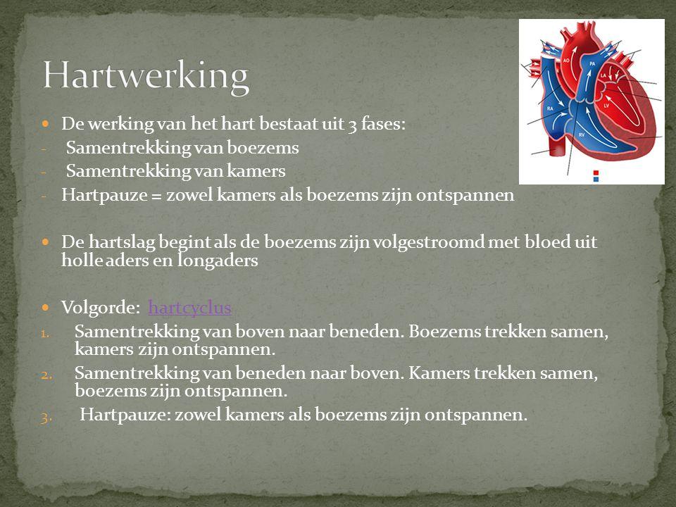 De werking van het hart bestaat uit 3 fases: - Samentrekking van boezems - Samentrekking van kamers - Hartpauze = zowel kamers als boezems zijn ontspa