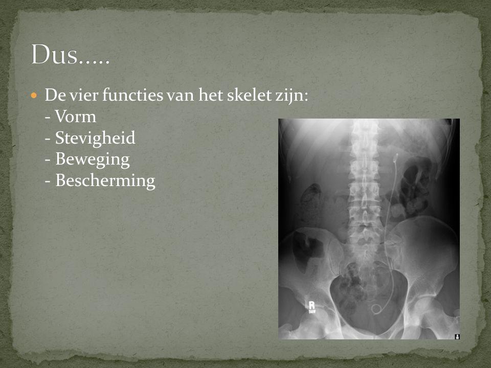 De vier functies van het skelet zijn: - Vorm - Stevigheid - Beweging - Bescherming
