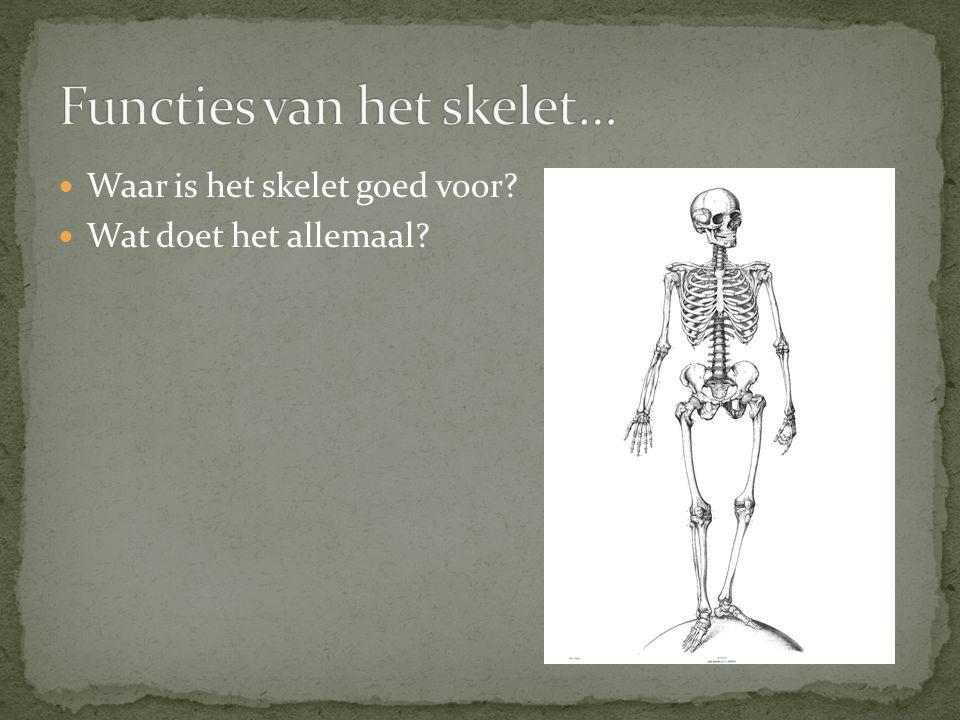 Waar is het skelet goed voor? Wat doet het allemaal?