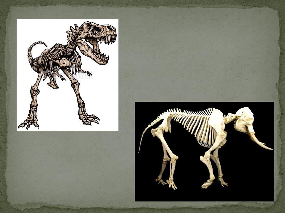 Het skelet geeft vorm aan het lichaam Hoe maken wij daar nog meer gebruik van?