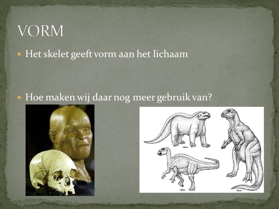 Geen botten?