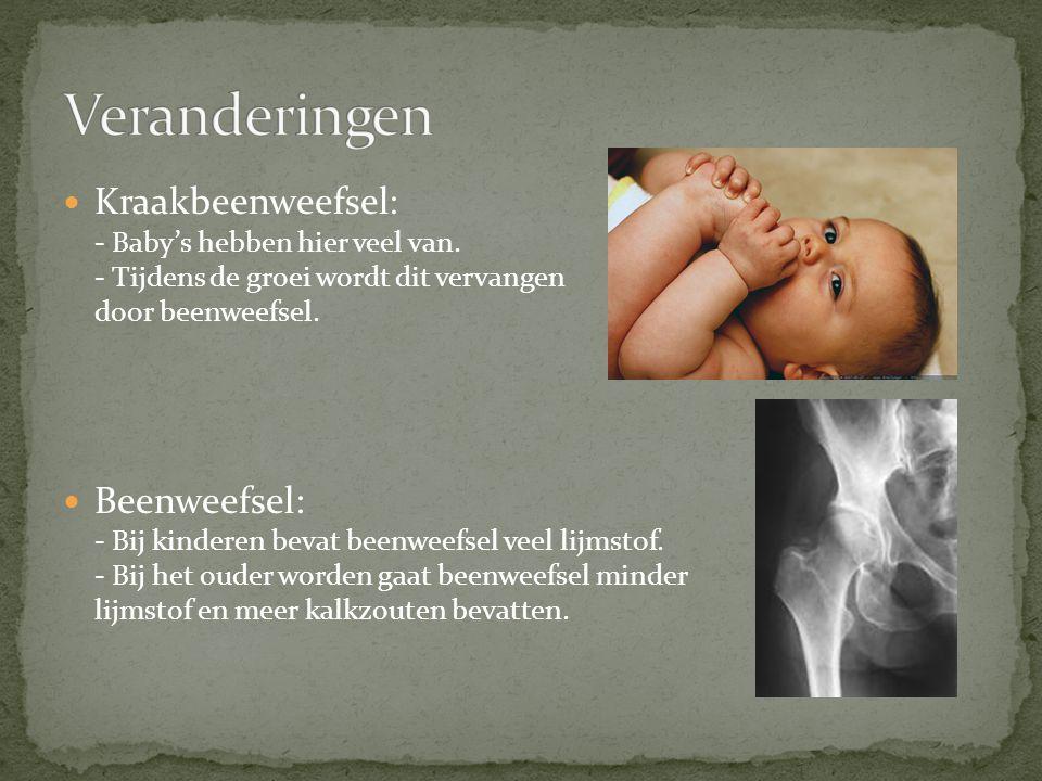 Kraakbeenweefsel: - Baby's hebben hier veel van. - Tijdens de groei wordt dit vervangen door beenweefsel. Beenweefsel: - Bij kinderen bevat beenweefse