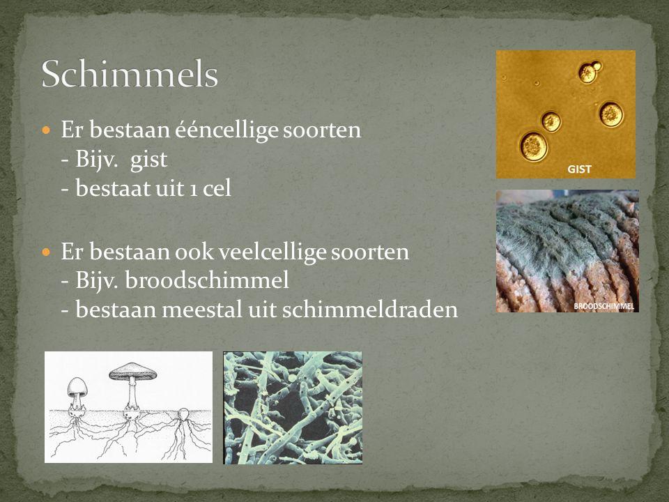 Er bestaan ééncellige soorten - Bijv. gist - bestaat uit 1 cel Er bestaan ook veelcellige soorten - Bijv. broodschimmel - bestaan meestal uit schimmel