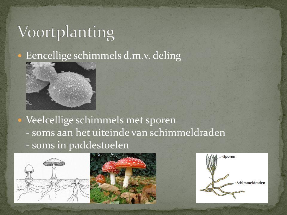Nuttig: - ze ruimen dode resten van organismen op - het maken van medicijnen en voedsel voor ons Nadelen: - Ziekten - Voedselbederf