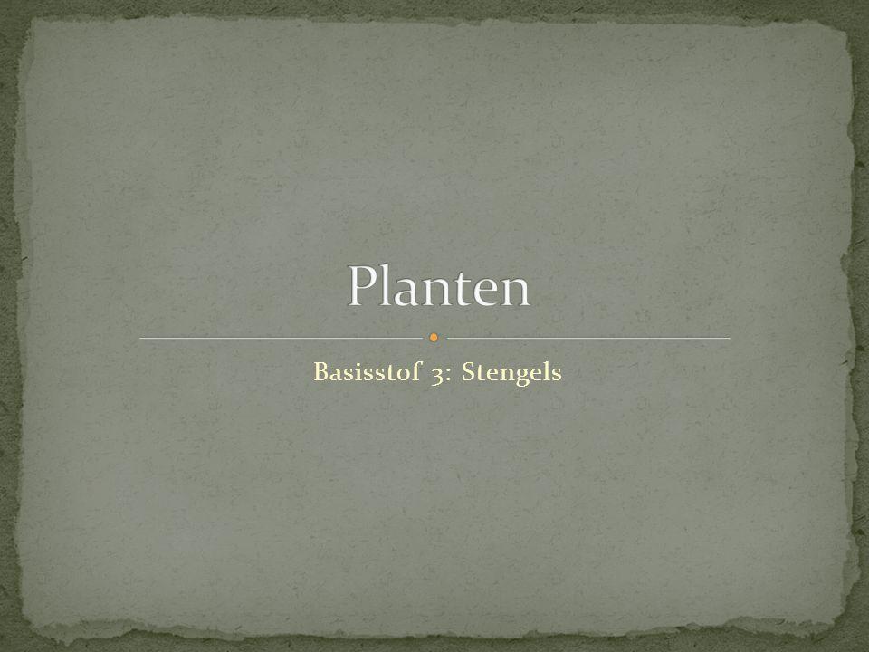Basisstof 3: Stengels