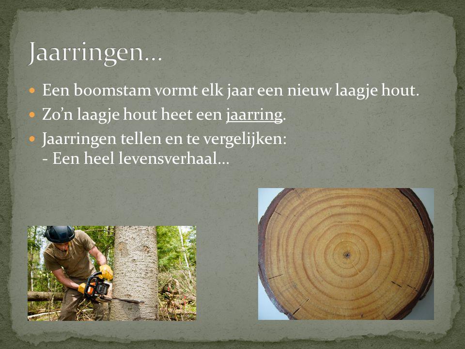 Een boomstam vormt elk jaar een nieuw laagje hout. Zo'n laagje hout heet een jaarring. Jaarringen tellen en te vergelijken: - Een heel levensverhaal…
