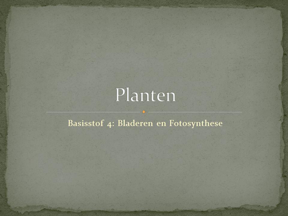 Basisstof 4: Bladeren en Fotosynthese