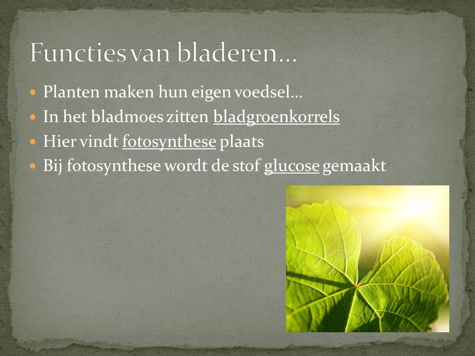 Planten maken hun eigen voedsel… In het bladmoes zitten bladgroenkorrels Hier vindt fotosynthese plaats Bij fotosynthese wordt de stof glucose gemaakt
