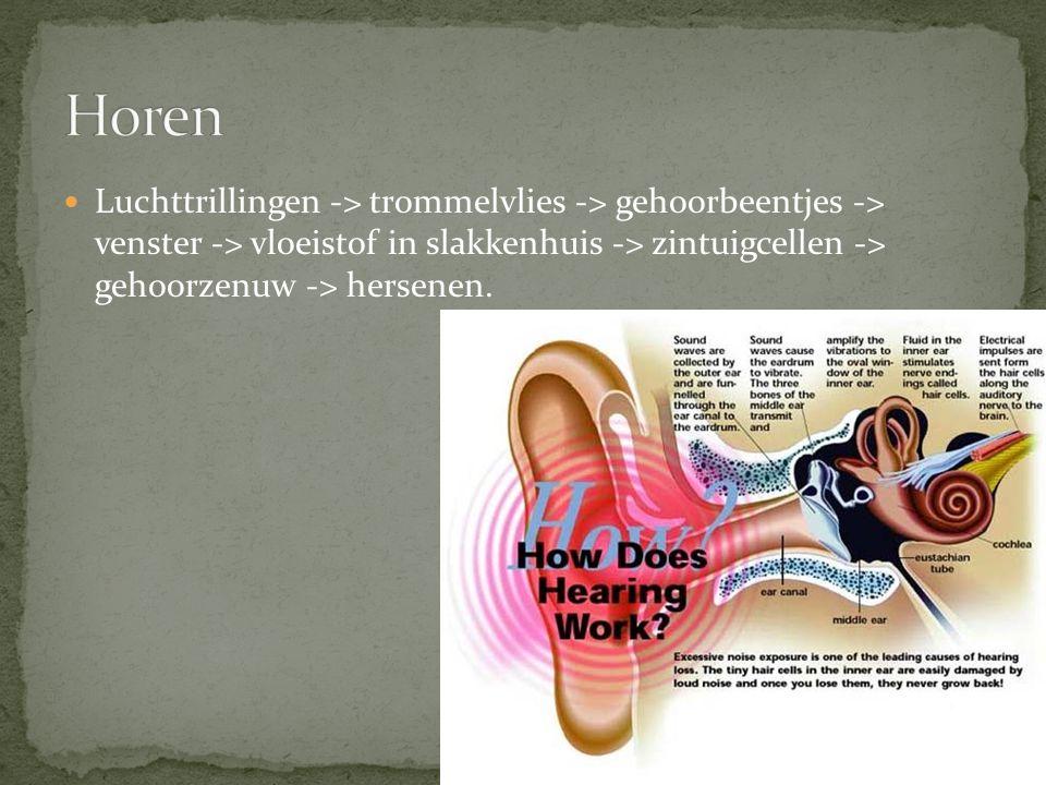 Luchttrillingen -> trommelvlies -> gehoorbeentjes -> venster -> vloeistof in slakkenhuis -> zintuigcellen -> gehoorzenuw -> hersenen.