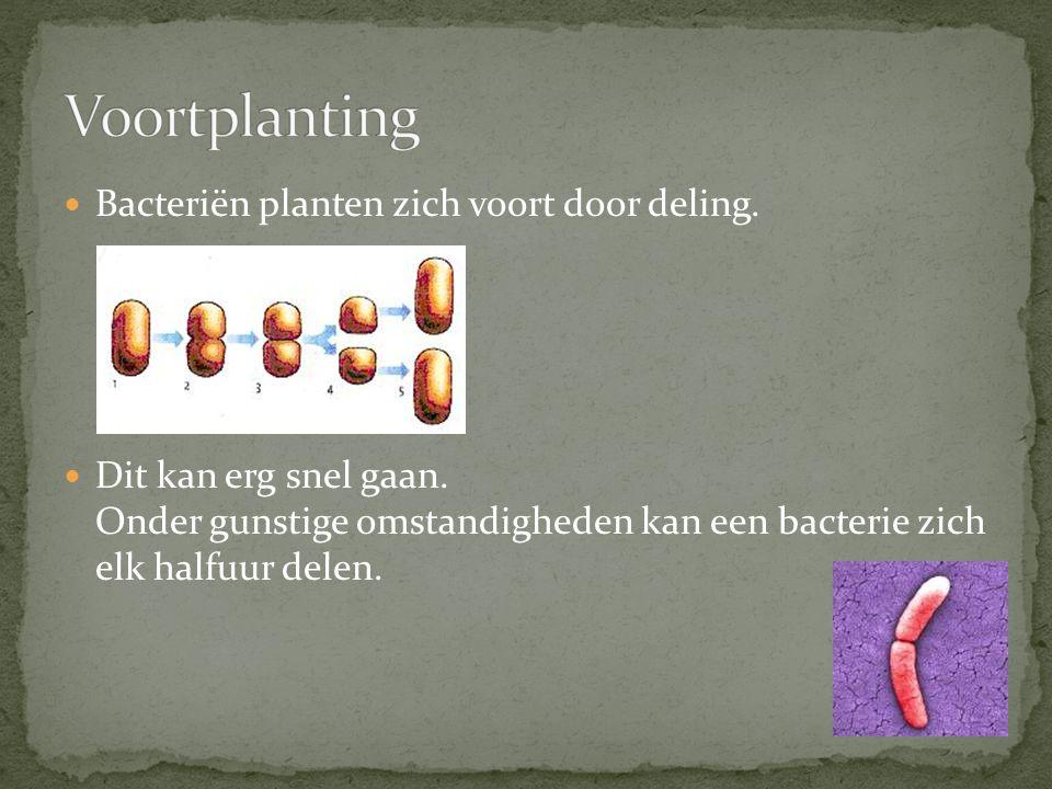 Bacteriën planten zich voort door deling.Dit kan erg snel gaan.