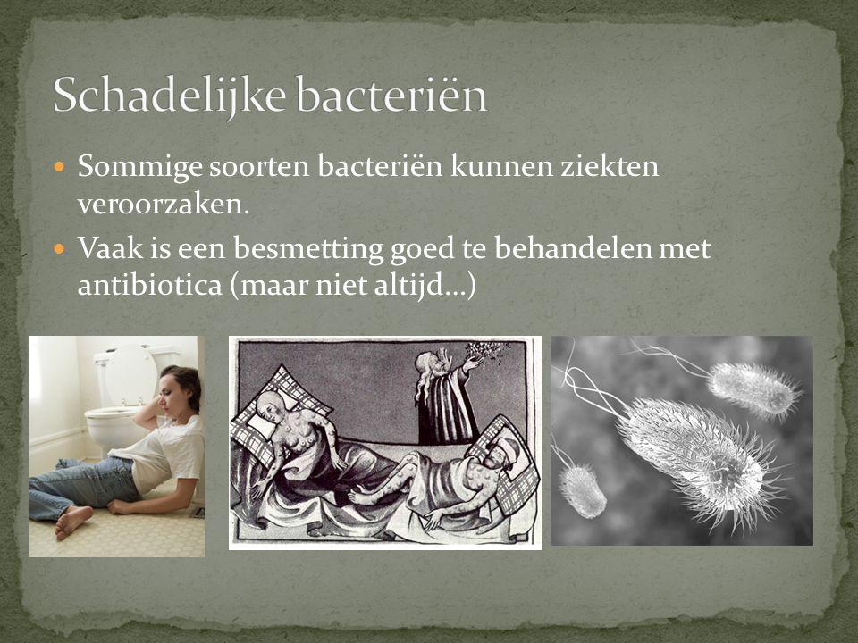 Sommige soorten bacteriën kunnen ziekten veroorzaken.
