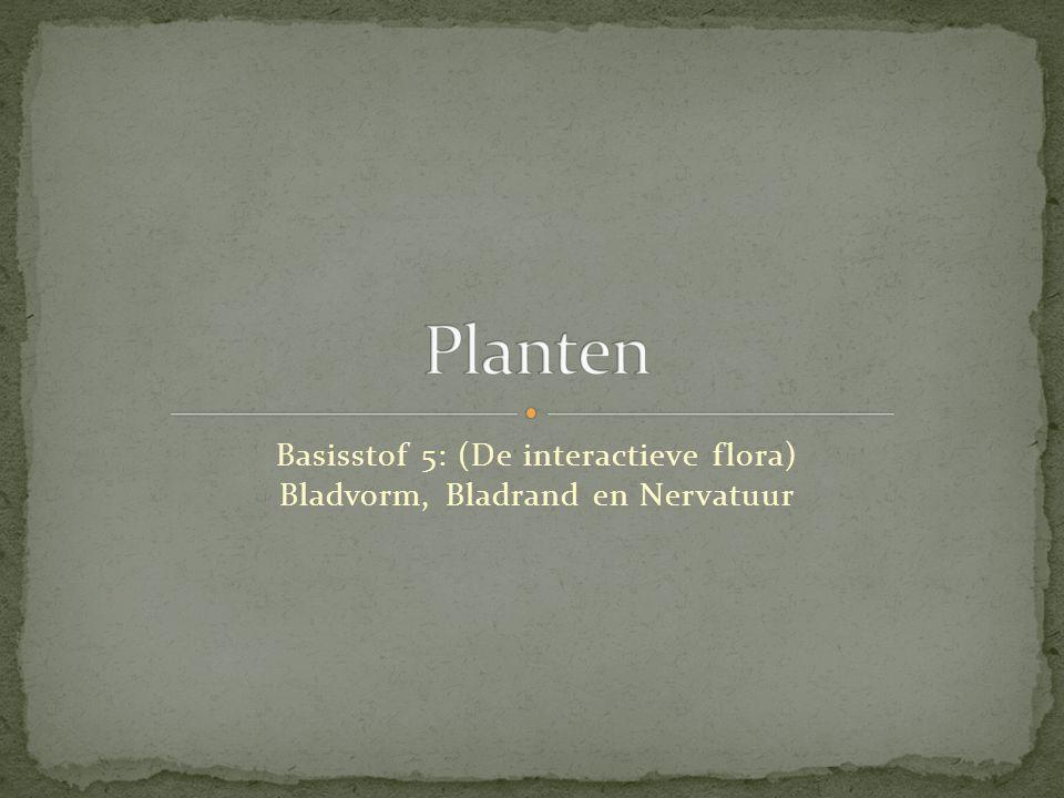 Basisstof 5: (De interactieve flora) Bladvorm, Bladrand en Nervatuur