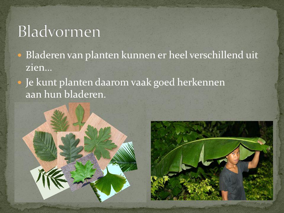 Bladeren van planten kunnen er heel verschillend uit zien… Je kunt planten daarom vaak goed herkennen aan hun bladeren.