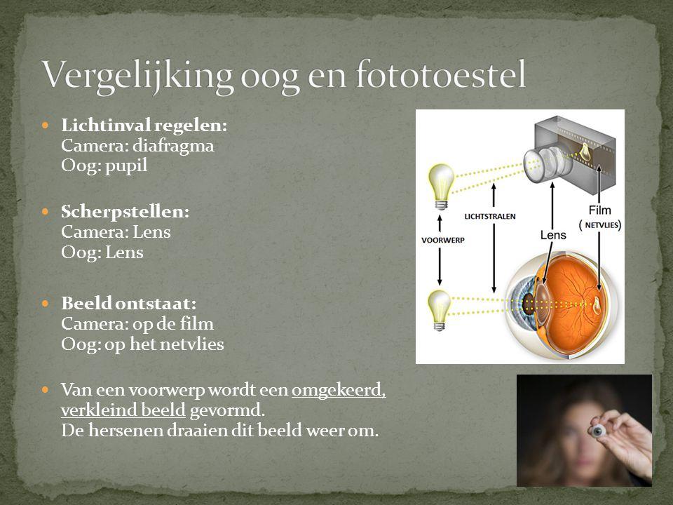 Lichtinval regelen: Camera: diafragma Oog: pupil Scherpstellen: Camera: Lens Oog: Lens Beeld ontstaat: Camera: op de film Oog: op het netvlies Van een