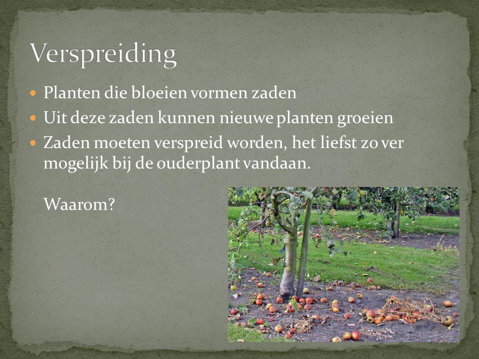 Planten die bloeien vormen zaden Uit deze zaden kunnen nieuwe planten groeien Zaden moeten verspreid worden, het liefst zo ver mogelijk bij de ouderplant vandaan.