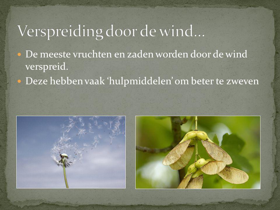 De meeste vruchten en zaden worden door de wind verspreid.