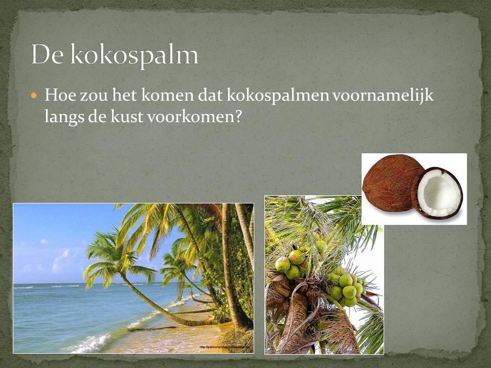 Hoe zou het komen dat kokospalmen voornamelijk langs de kust voorkomen?