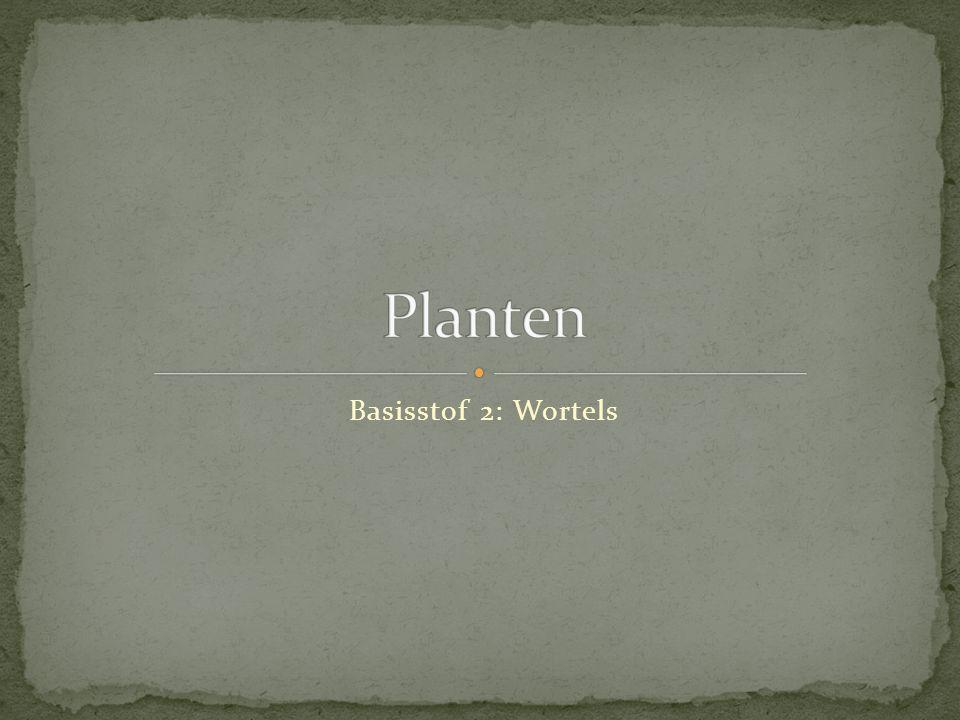 Basisstof 2: Wortels