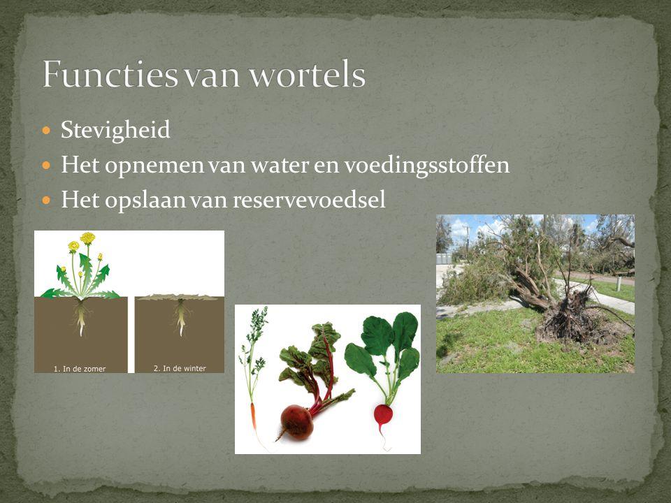 Stevigheid Het opnemen van water en voedingsstoffen Het opslaan van reservevoedsel