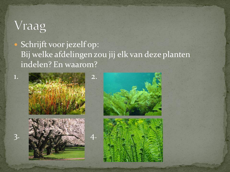 Schrijft voor jezelf op: Bij welke afdelingen zou jij elk van deze planten indelen? En waarom? 1. 2. 3. 4.
