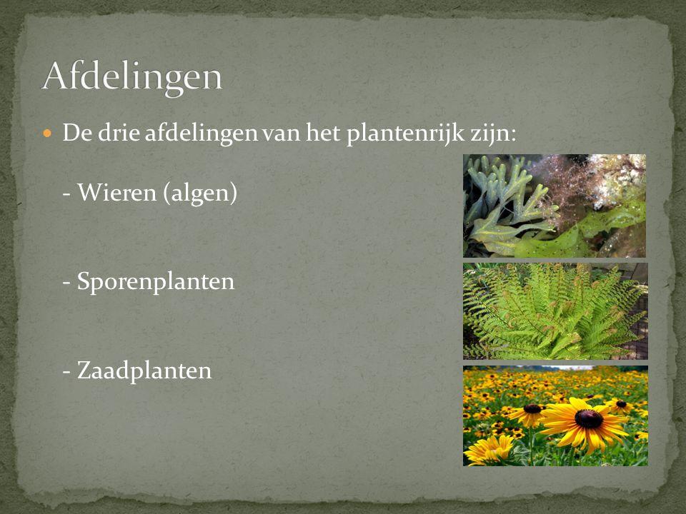 De drie afdelingen van het plantenrijk zijn: - Wieren (algen) - Sporenplanten - Zaadplanten