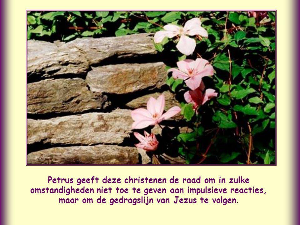 Het is een blijk van Gods genade, wanneer u verdraagt wat u moet lijden voor uw goede daden. 1 Petrus 2,20