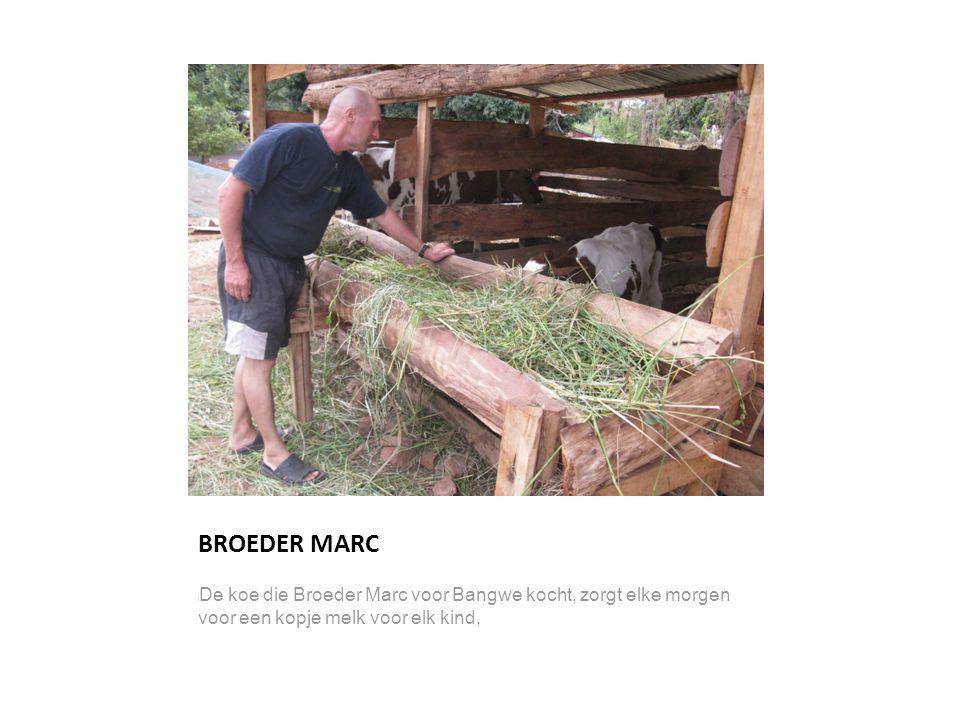 BROEDER MARC l De koe die Broeder Marc voor Bangwe kocht, zorgt elke morgen voor een kopje melk voor elk kind,